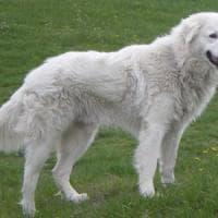 Biella: disturba i ladri, cane ucciso a bastonate in una cascina