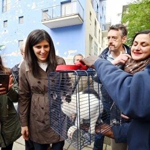 Torino: una task force  ha liberato il gattino imprigionato nella palazzina ex Moi sequestrata