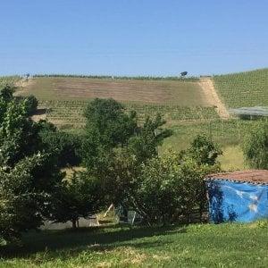 Un contadino di 80 anni l'autore della mega svastica su una collina dell'Astigiano