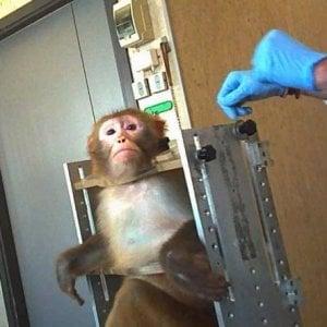 Risultati immagini per macachi vivisezione a torino