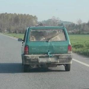 Viaggiava con sei pecore sulla Panda, denunciato agricoltore di Chieri