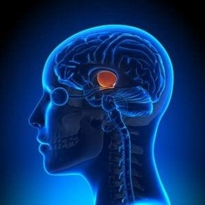 Neuroscienze: a Torino una scoperta rivoluzionaria sui meccanismi della paura