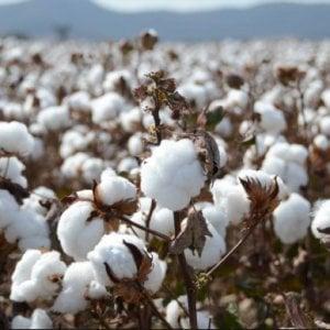 Regime ipocalorico e fibre naturali addosso per resistere al caldo