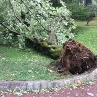 Tempesta su Verbania, decine di alberi abbattuti a Villa Taranto