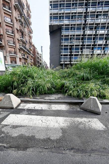 Torino, benvenuti nella città giungla