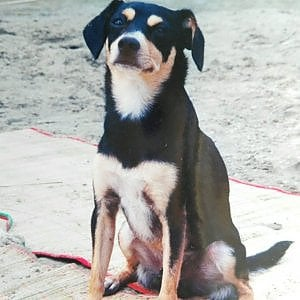 """""""Cerco disperamente Lucky, il mio cagnolino portato via 18 anni fa quando ero bambina"""""""