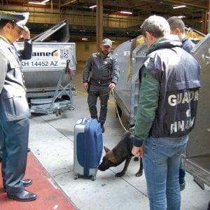 Torino, Escos il cane della Fiamme Gialle che sa fiutare l'odore di 11 milioni di euro sporchi