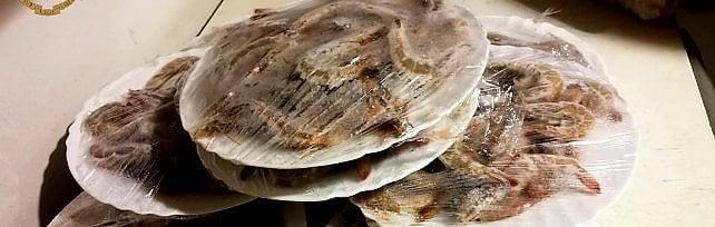 Torino, al ristorante cinese carne pesce,  involtini primavera contaminati da insetti