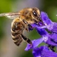 Cambiamenti climatici, Torino scommette sulle farfalle alleate delle api nell'im...