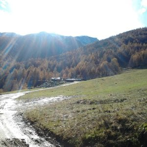 Ala di Stura, muore cercatore di funghi, è il decimo dell'anno in Piemonte