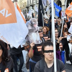 """""""Salviamo i macachi"""",  animalisti da tutta Italia  in corteo nel centro di Torino"""