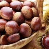 Le castagne, simbolo goloso e benefico dell'autunno