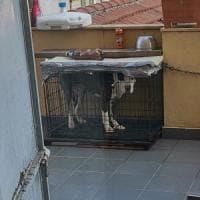 Torino, teneva il cane in una gabbia di un metro quadro: denunciato per