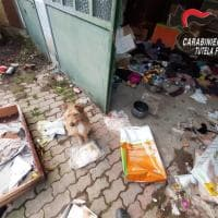 Asti, salvato cagnolino abbandonato da mesi tra i rifiuti,
