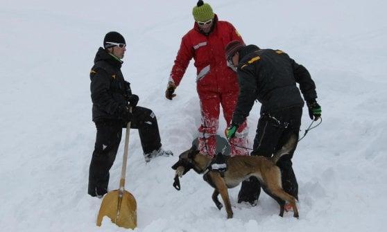 Valle d'Aosta, cane soccorritore sopravvive 16 giorni sul ghiacciaio del Cervino