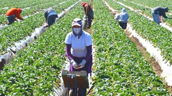 """Piemonte, """"al lavoro nei campi prima gli italiani"""": la ricetta dell'assessora di Fdi per salvare i raccolti"""