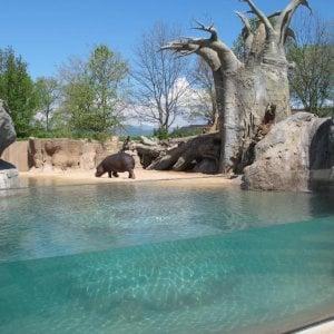 Cumiana, riapre il bioparco Zoom, tornano il rinoceronte e le giraffe