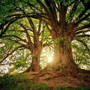 Da soli siamo alberi, insieme una foresta