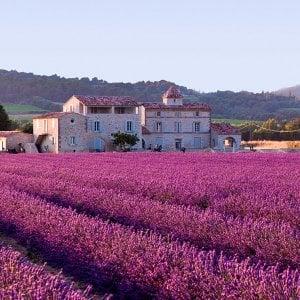 A luglio il Piemonte si colora  di viola e profuma di lavanda