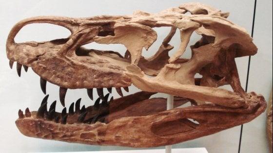 I coccodrilli africani hanno attraversato l'Atlantico, dall'Università di Torino la dimostrazione