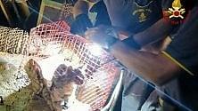 In fondo al pozzo c'è un gattino: i vigili del fuoco lo salvano