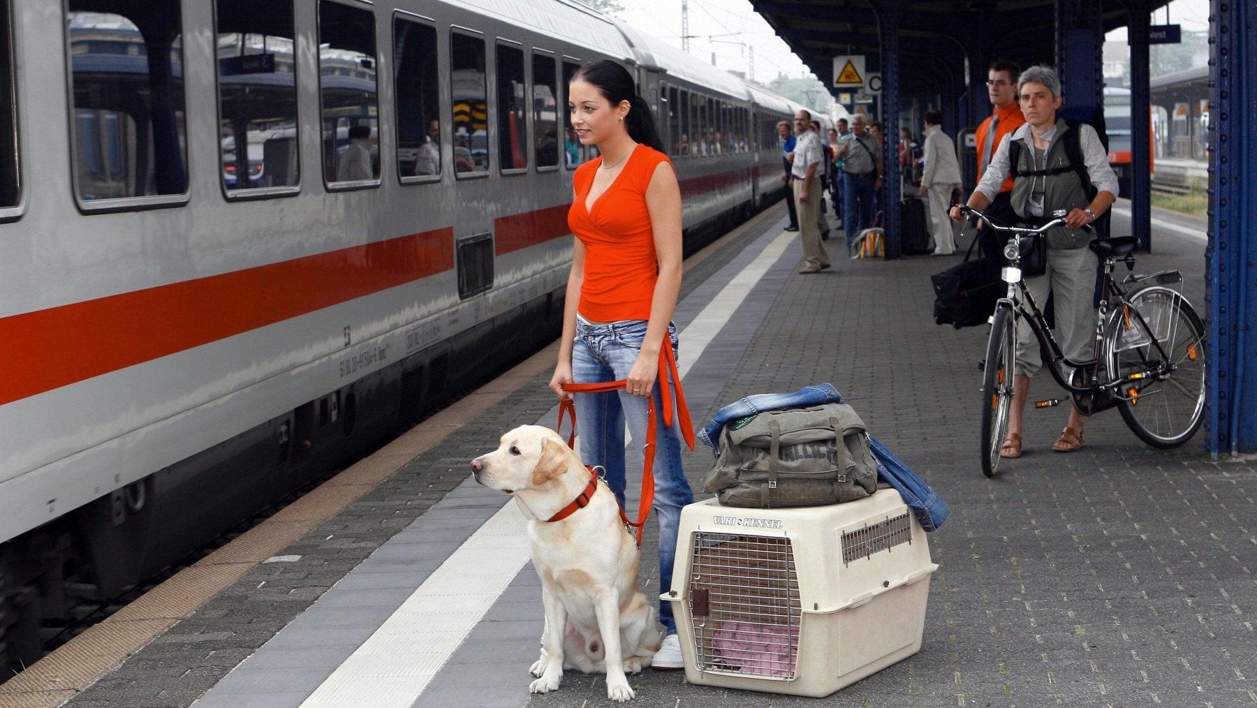 i cani in treno
