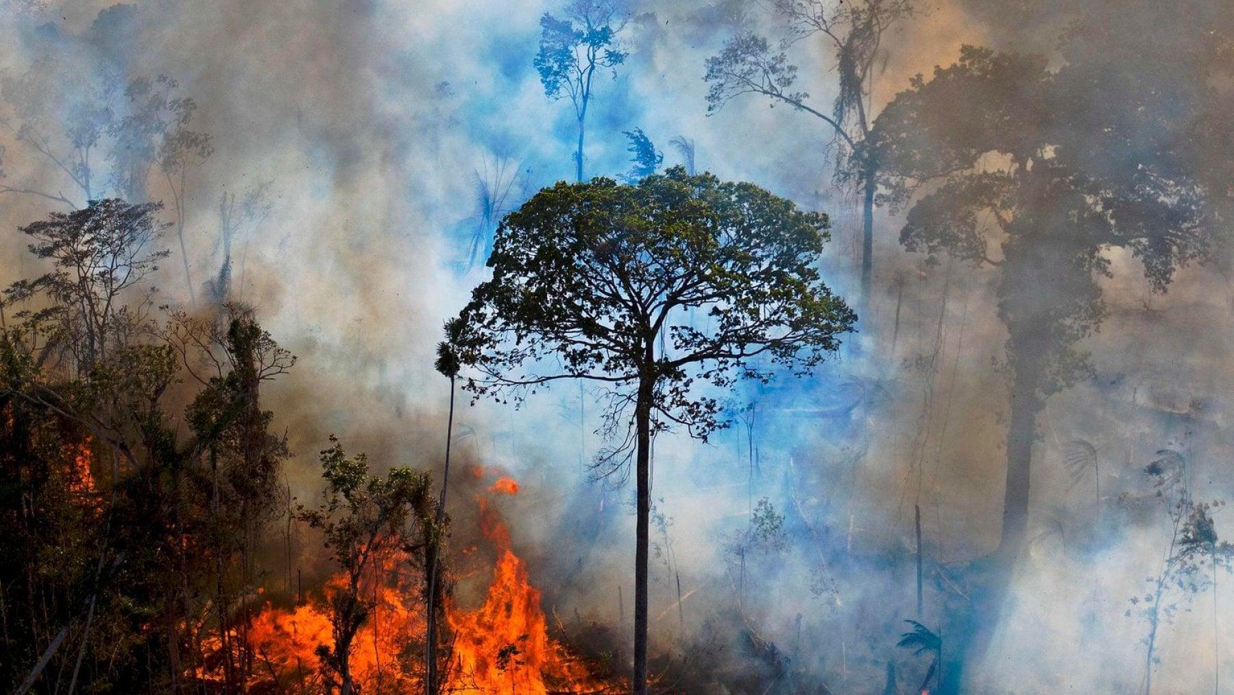 181041626 d99ac551 8f07 43dd b75e ccaaef65d053 - Amazzonia, 2020 anno nero: devastati 8.500 chilometri quadrati di foreste