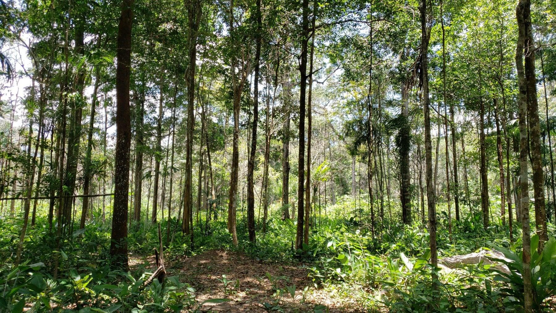 La nuova Amazzonia è sulle Ande. E potrà salvare il mondo