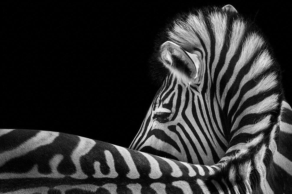 Meraviglia allo zoo, gli scatti artistici di Ademeit