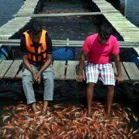 Sri Lanka. Fish Therapy. In acque libere