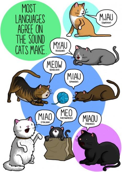 Tumblr, ''Miao'' in tutte le lingue del mondo