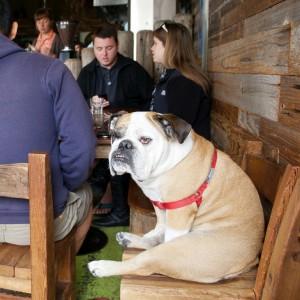Animali al ristorante, così cade un tabù