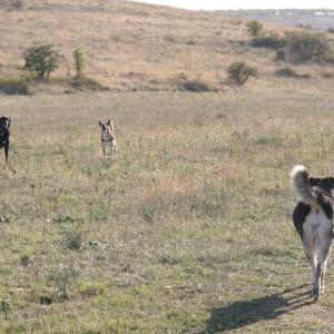 Quando due cani si incontrano il movimento della coda è rivelatore