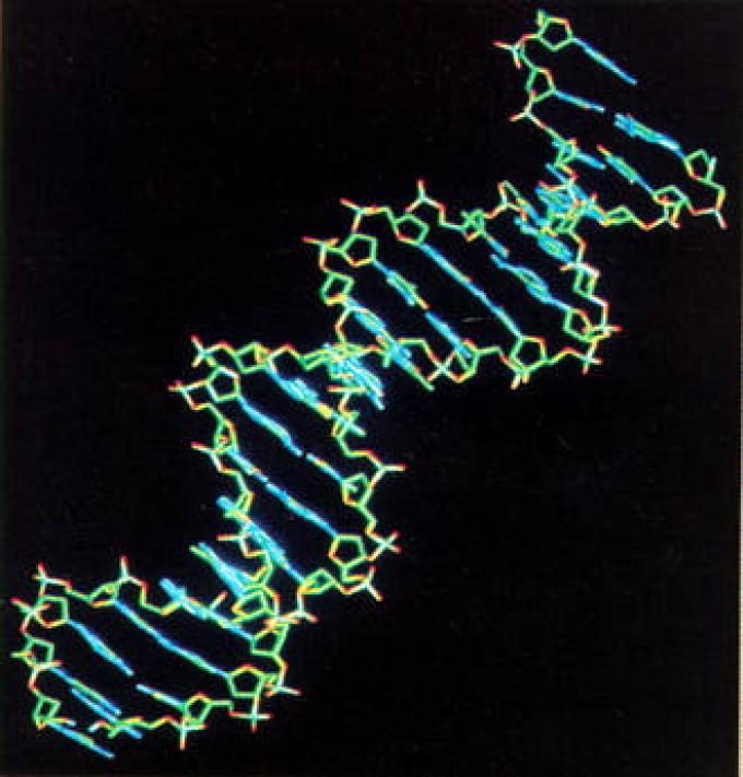 Genetica, un algoritmo identifica varianti Dna tumori