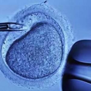 """Bimbo di un anno e mezzo tolto ai genitori dal giudice. """"Nato con l'utero in affitto"""""""