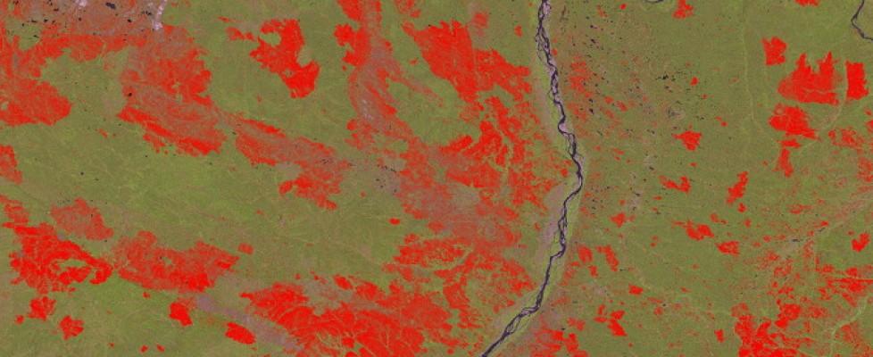 Deforestazione, ecco le foto dallo spazio:  persi 2,3 milioni di chilometri, in Ue migliora