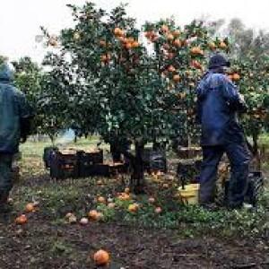 Rosarno, la raccolta delle arance uccide ancora trentunenne liberiano muore per il freddo