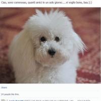 E Dudù scende in campo su Facebook: 600 amici per il cane di Silvio e Francesca
