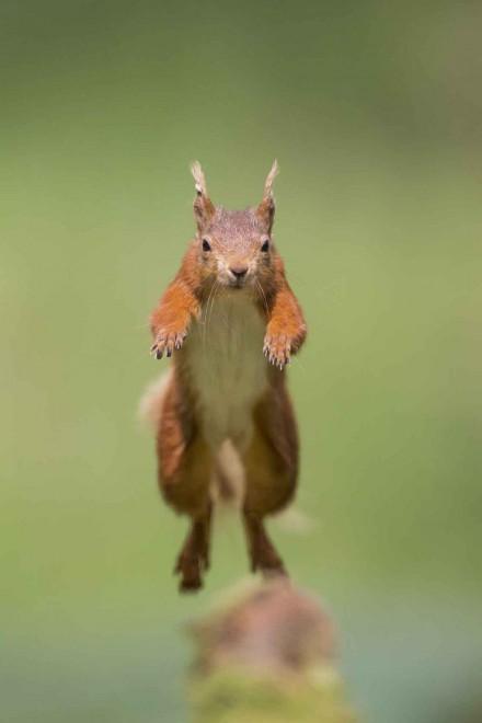 Il salto dello scoiattolo ninja, la fotosequenza