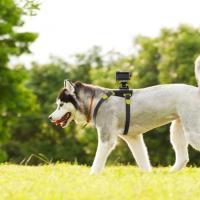 Cani e gatti smart, al Ces c'è l'hi-tech a quattro zampe