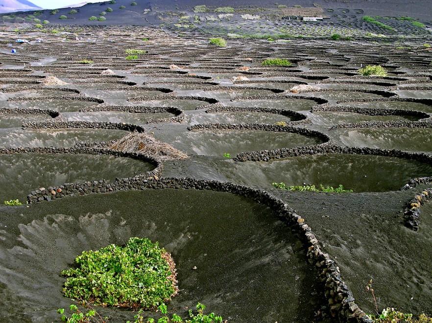 Canarie, c'è vite sul vulcano: l'altra faccia di Lanzarote