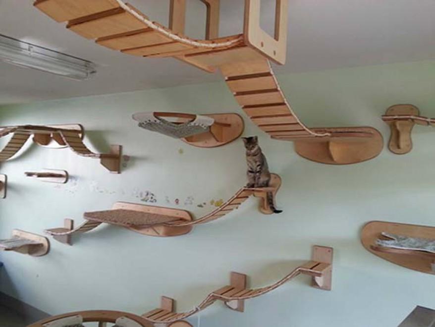 Una casa a misura di gatto: i mobili per felini - Repubblica.it
