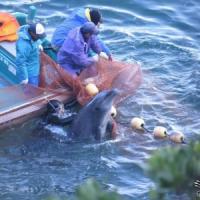 """""""Salvate i delfini"""":"""