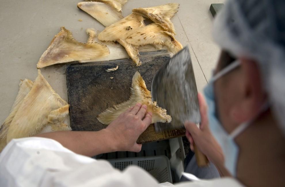 Cina, la fabbrica della morte: macellati centinaia di squali balena