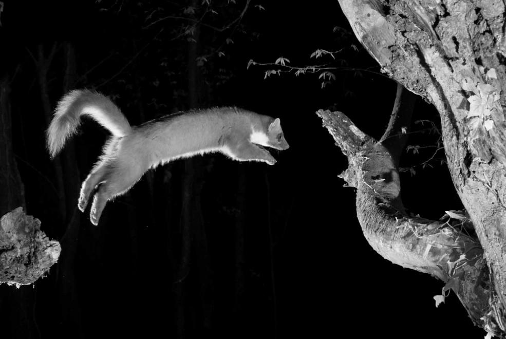 Quando tramonta il sole: la vita notturna degli animali