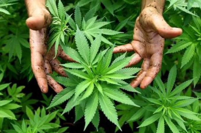 """Battaglia di una malata di sclerosi multipla<br /> """"La marijuana mi aiuta, liberalizzatela"""""""