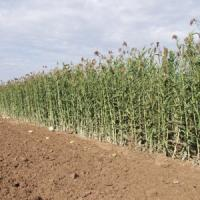 Italia leader del bio in Europa: un miliardo di export, tre di giro d'affari
