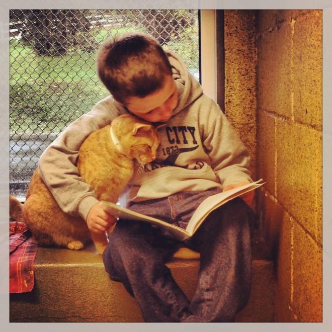 Usa, i bimbi leggono ai gatti randagi: un'amicizia che cura