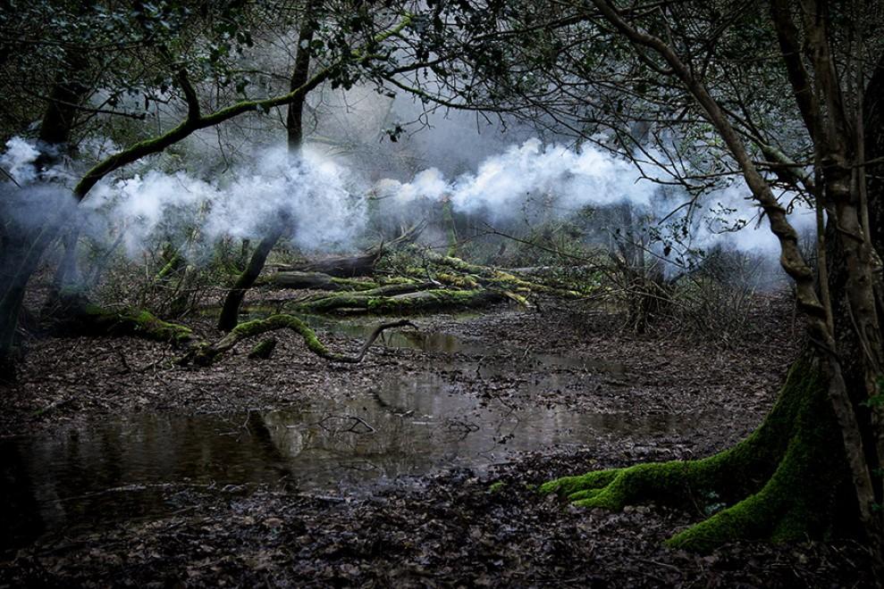 Nuvole tra gli alberi: il bosco racconta