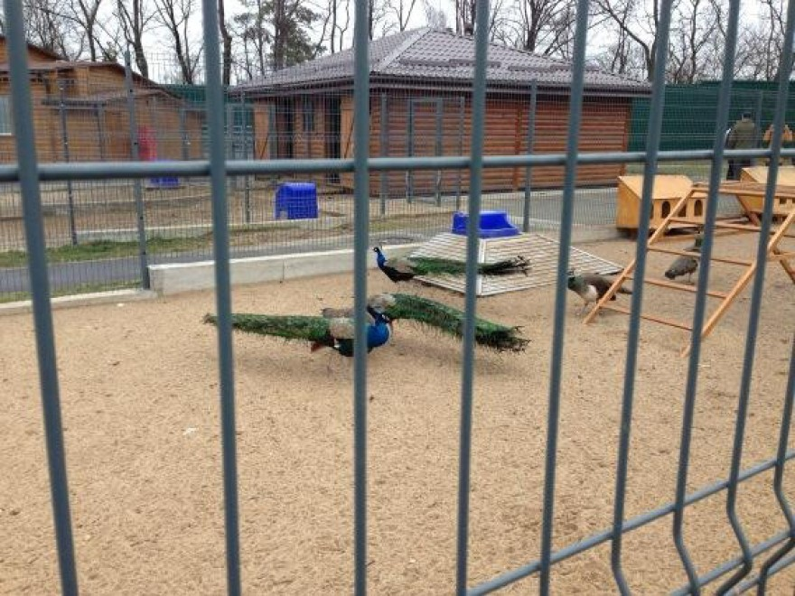 Ucraina, la reggia di Yanukovich. Anche uno zoo privato
